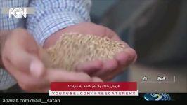 فروش خاک به دولت به اسم گندم خودکفایی در تولید گندم به سبک جمهوری اسلامی