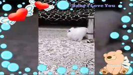 خرگوش بانمکم وعشقم در هشت ماهگی