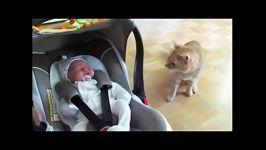 اولین ملاقات گربه نوزاد تازه متولد شده خانواده
