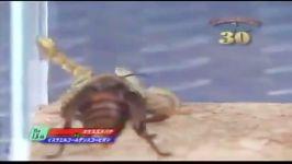 نبرد عقرب زنبور هورنت