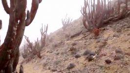 برداشت آب گوارا مِه در یکی خشکترین نقاط زمین
