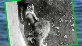 جنگ شیر ببرسال 1969