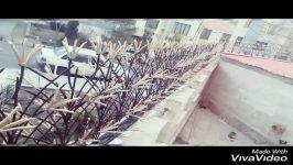 حفاظ برتر 09122403540#قیمت حفاظ شاخ گوزنی جاجرود