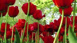 ویژه عید نوروز عید تو عید من عید همه مبارک  تبریک عید