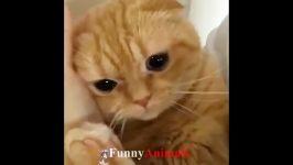 ♥ ناز گربه ها بچه گربه ها چیزهای خنده دار 2018 ♥ # 7  خنده دار گربه تلفیقی