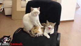 ماساژ گربه سگها گربه ها  بچه گربه های ناز