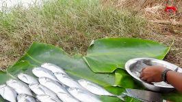 ماهی سرخ شده در سبک اولیه ماهی شگفت انگیز پخت پز ماهی تون ماهی