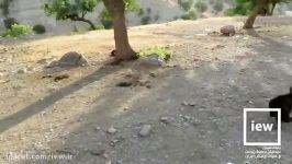 دو توله خرس تنها در اندیکا مشاهده تحت مراقبت قرار گرفتند