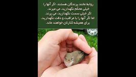 مراقبت روابط،مثل مراقبت یک پرنده کوچک است...