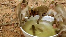 شگفت انگیز مار حمله میمون هوشمند در حالی ماهی بازی  حمله شگفت انگیز حیوانات
