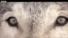 دنیای حیوانات  چهره در چهره یک قاتل  Face to Face with a Killer