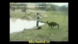 شیطونی کانگرو.....عجب حیوونایی پیدا میشن