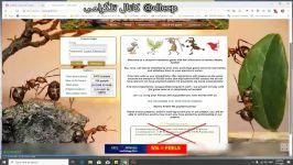 سایت معتبر مورچه ها httpcash anthill.rui29522 معتبر ۳ سال سابقه کاری