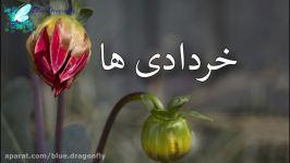 کلیپ تولد خردادی ها آهنگ تولد بهاری کلیپ تبریک تولد خردادی های دوست داشتنی
