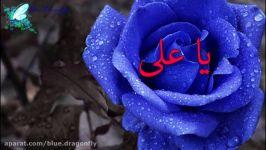 کلیپ شب قدر شب توسل به امام علی آهنگ شب قدر احیا شهادت حضرت علی التماس دعا