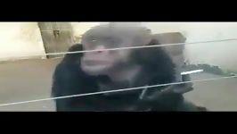میمون معتاد باغ وحش سیگار سیگار روشن میکند