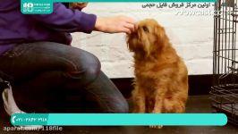 تربیت سگ گارد  تربیت سگ ژرمن  تربیت سگ خانگی  تربیت سگ نگهبان