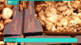 آموزش پرورش قارچ دکمه ای  پرورش قارچ دارویی  پرورش قارچ صدفی  فیلم پرورش قارچ