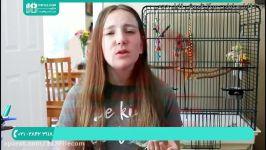 آموزش تربیت طوطی  تربیت طوطی  طوطی سخنگو  طوطی بامزه  طوطی ملنگو  طوطی