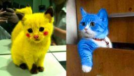 بچه گربه های ناز  مجموعه فیلم های گربه ناز خنده دار