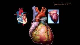Heart Disease and Heart Attacks بیماری های قلبی حمله قلبی