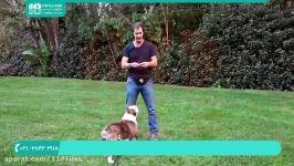 آموزش تربیت سگ  تربیت سگ خانگی  تربیت سگ های خانگی  تربیت سگ نگهبان