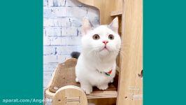 گربه های بامزه  بچه گربه های بامزه  قسمت 8