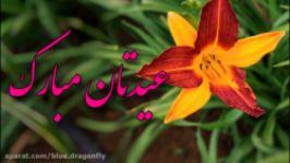 کلیپ تبریک عید غدیر  دف نوازی عید  آهنگ عید غدیر خم  مولودی یا مولا امام علی