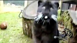 دوستی حیوانات عشق دوستی هم