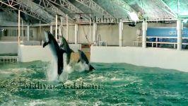 روتوسکوپی فیلم کلاغ پَر دلفین پَر  2