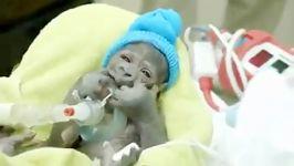 نوزاد گوریل تازه متولد شده .......