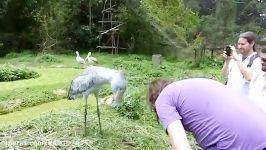 لَک لَکی یادگار مانده اجداد دایناسورهای پرنده