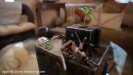 تصفیه هوای خانه فیلتر هوای گیاهی