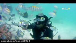 زیبایی های خلیج فارس آبزیان جزیره کیش روز خلیج فارس