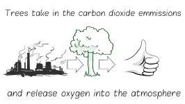 درختان را نجات دهیم، دنیا را نجات دهیم