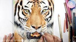 آموزش نقاشی مداد رنگی حیوانات  دوره مداد رنگی ۱