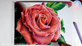 نقاشی مداد رنگی گل رز بخشی دوره مداد رنگی ۱