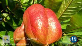 ده تا نا شناخته ترین میوه های دنیا احتملاً نمیشناختید
