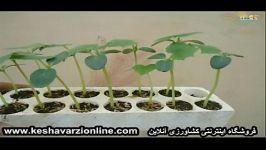 از رشدتابرداشت گیاه لوفا درگلخانه رامشاهده خواهیدکرد...