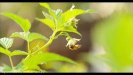 زندگی زنبورهای عسل در کندو مراقبت آنها